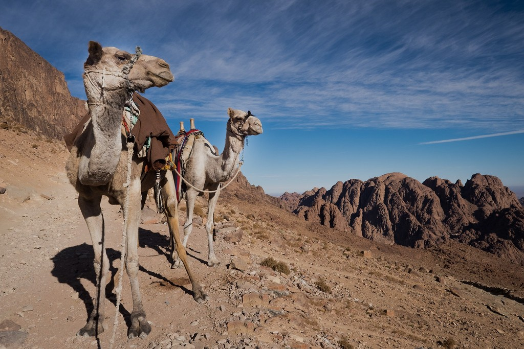 St Catherine Monastery and Mount Sinai Tour from Sharm El Sheikh by Bus